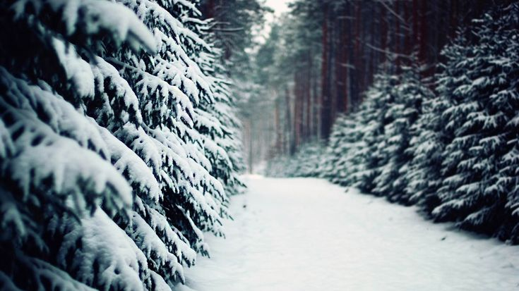 Snow road in the forest-winter scenery HD Wallpaper - 1366x768 ...