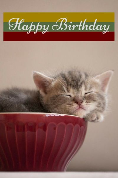 Happy Birthday cute cat wishes quote: