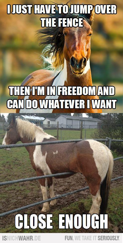 horse laughs ha ha ha ha, they really do dumb stuff like this too!