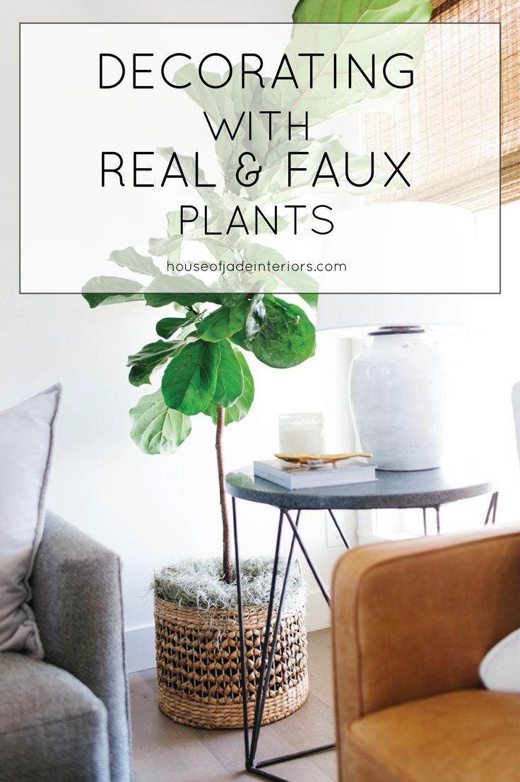 Tips For Decorating With Real And Faux Plants House Of