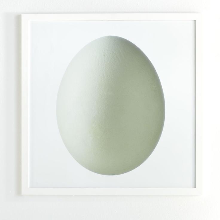 W9525Bird's Egg Wall Art - Kiwi