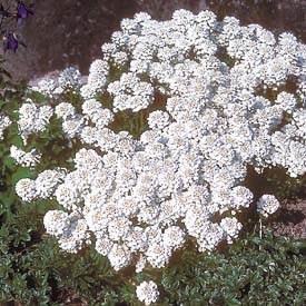 17 Best Images About Starkey Sun On Pinterest Gardens