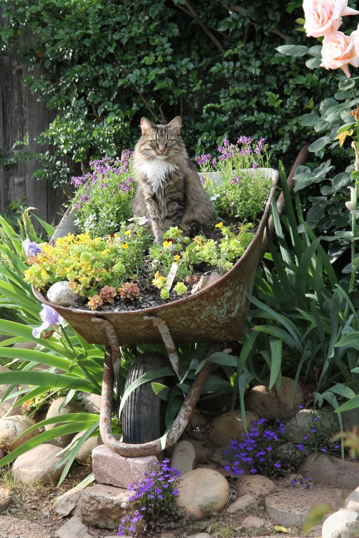 wheelbarrow full of succulents and a cat, uncredited
