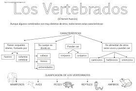 Mapes conceptuals dels vertrebats