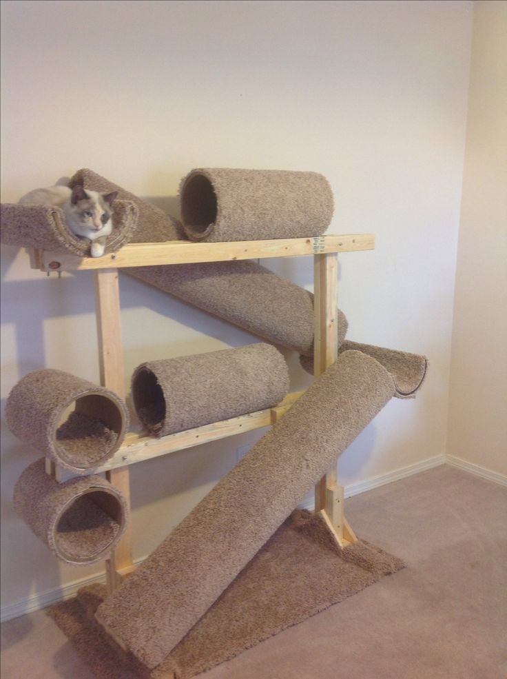 Hula Cat Hanging Out In Her DIY Cathouse/jungle Gym. Made With Heavy Duty  Cardboard Tubes, Boards, Carpet Remnant, A Few Nuts And Bolts And A Staple  Gun.