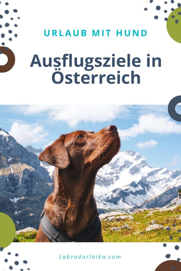 Pin Auf Hunde Unterwegs Reisen