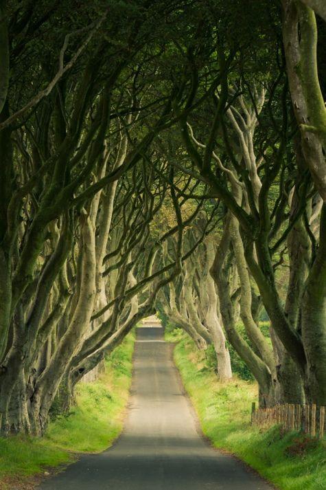 Таинственный лес, или Темная аллея в Ирландии