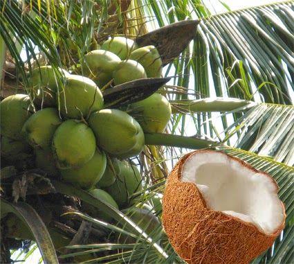Lyckans smed - Samtidigt i MalinMatildas hjärna: Kokosolja, ännu ett miljövänligt universalmedel