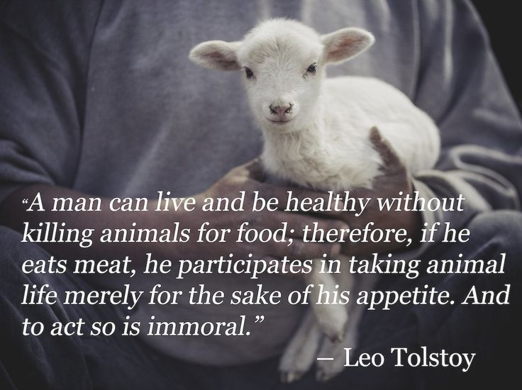 Ein Mensch Kann Leben Und Gesund Sein Ohne Tiere Fur Das Essen Zu Toten Wenn J Vegetarian Vegan Quotes Veganer Zitate Vegetarier Zitate Vegetarier
