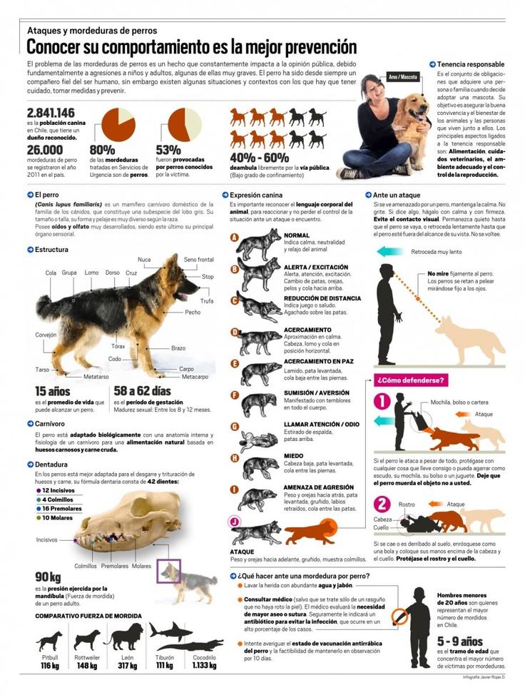 Cómo evitar el ataque de un perro