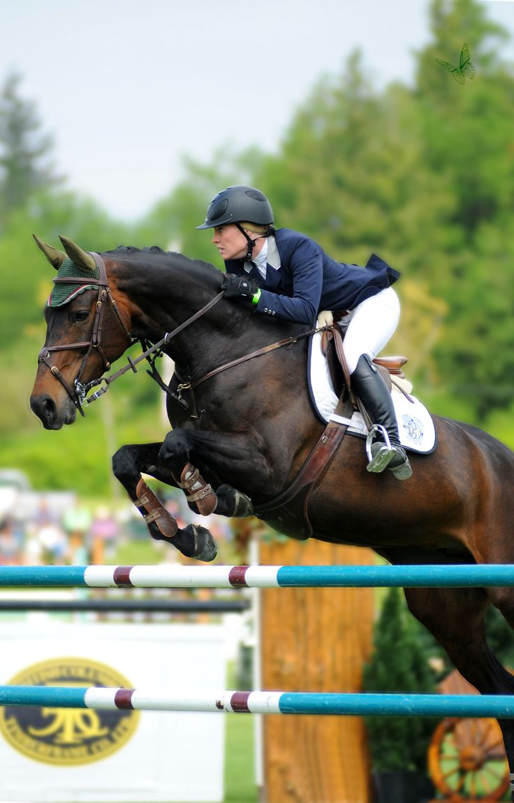 17 Best Images About Jump On Pinterest Jumping Horses