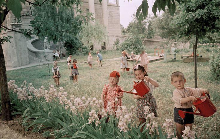 семена на советской 20