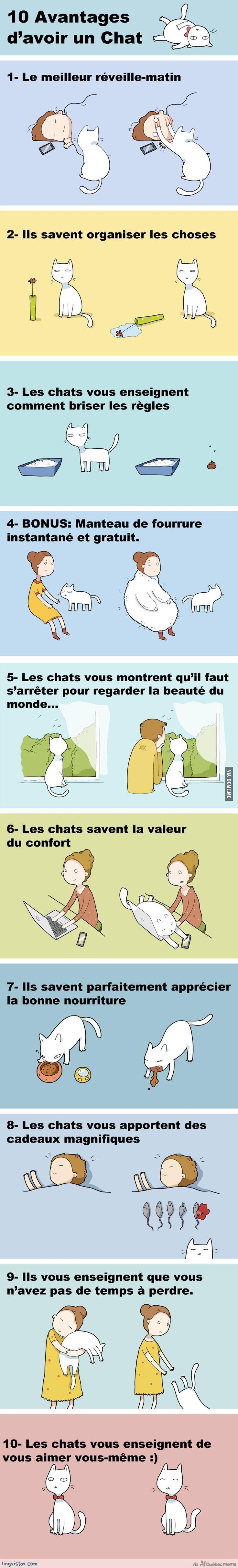 10 Avantages d'avoir un Chat – Québec Meme +