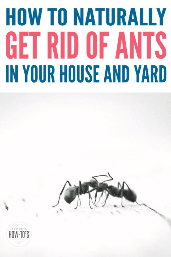 How To Get Rid Of Ants Naturally Two Non Toxic Ant Killers And Tips To Get Rid Of Ants In Your Kitchen Bathroom And Elsewh Get Rid Of Ants Rid Of