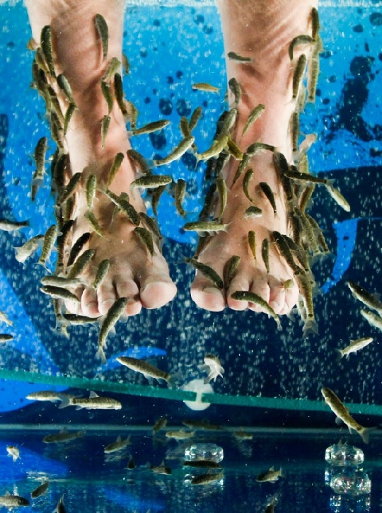 garra fish pedicure - not sure I could take it but its an interesting concept!