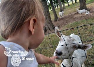 Why I Chose Raw Goat's Milk Over Infant Formula thecrunchymoose.com