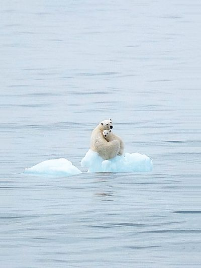 so precious, but makes me sad, there is not enough polar ice left for the beautiful creatures=(