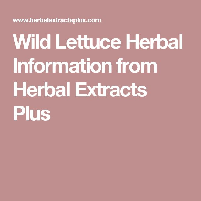 Wild Lettuce Herbal Information from Herbal Extracts Plus