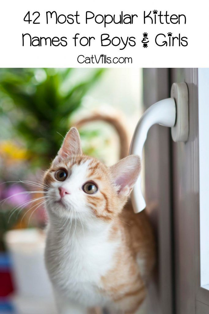 These Are The Top 42 Most Popular Kitten Names Catvills In 2020
