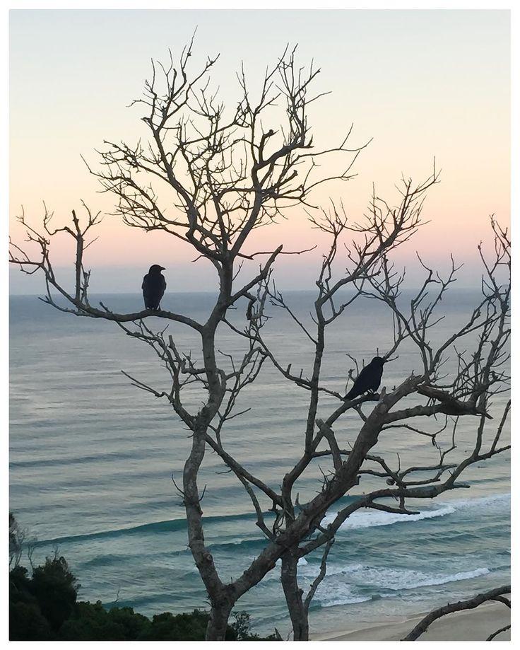 Sunday morning walks bringing the magic of Byron Bay. Pic @thecosmopolitanhippie #BAYactiveyoga #byronbay #home