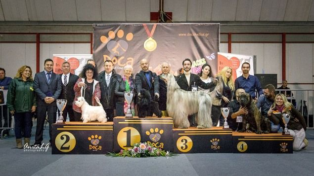 Εντυπωσιακό Ξεκίνημα για τον Κυνοφιλικό Όμιλο Λαμίας