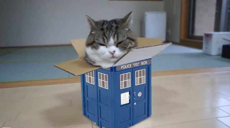Doctor Who cat!