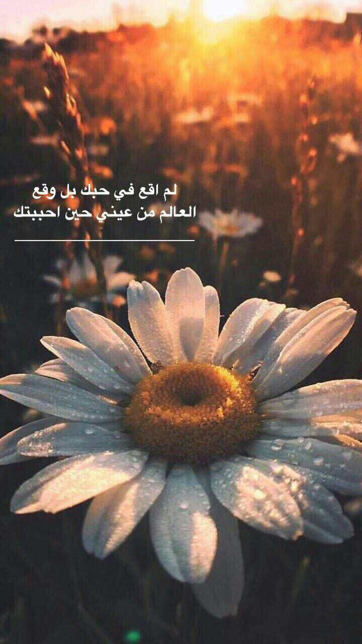 Pin By Zoz On صور Arabic Quotes Love Words Arabic Love Quotes