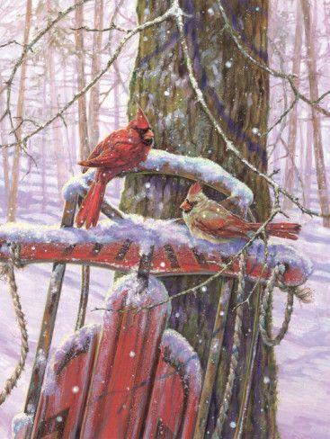 cardinals: Christmas Cards, Red Sled, Winter Scene, Winter Wonderland, Snow, Red Birds, Woman Racing, Animal, Cardinals