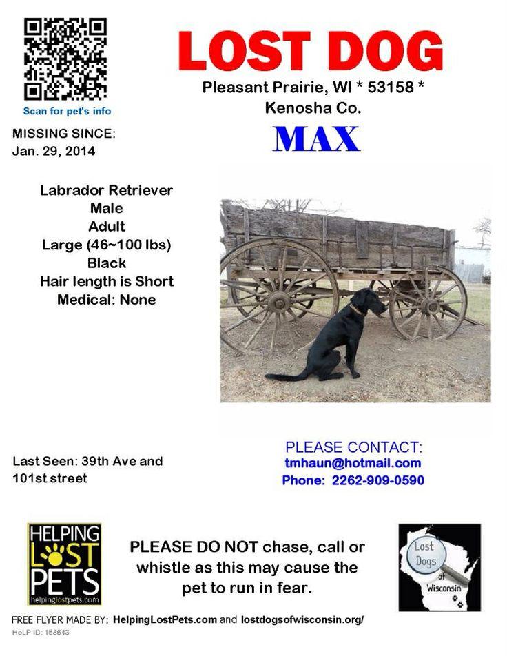 92 best WISCONSIN - US LOST DOG REGISTRY images on Pinterest - craigslist kenosha