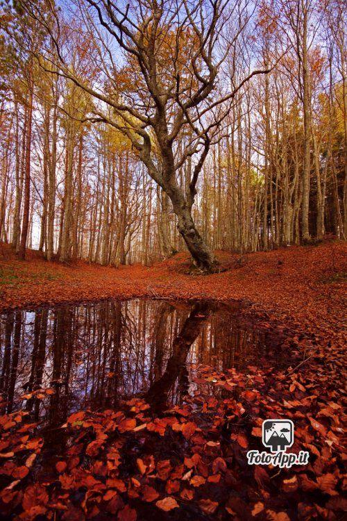 Foto di di Debora Costi - scattata da Ventasso