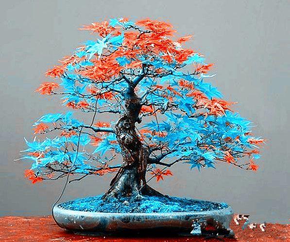 Die 25+ Besten Ideen Zu Bonsai Topf Auf Pinterest | Diy Gardening ... Obstbaume Im Topf Sorten Anpflanzen