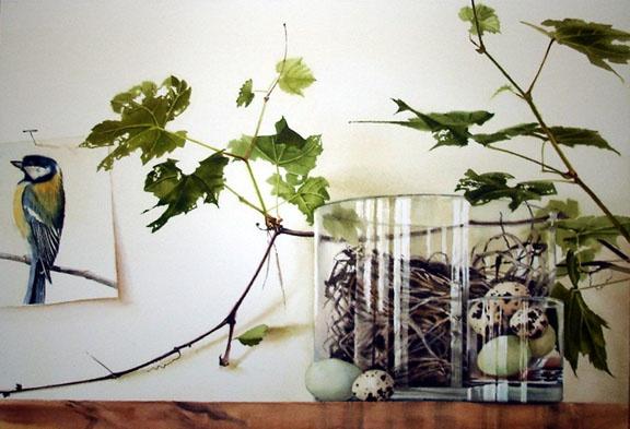 Robin's Nest / Stephanie Anderson