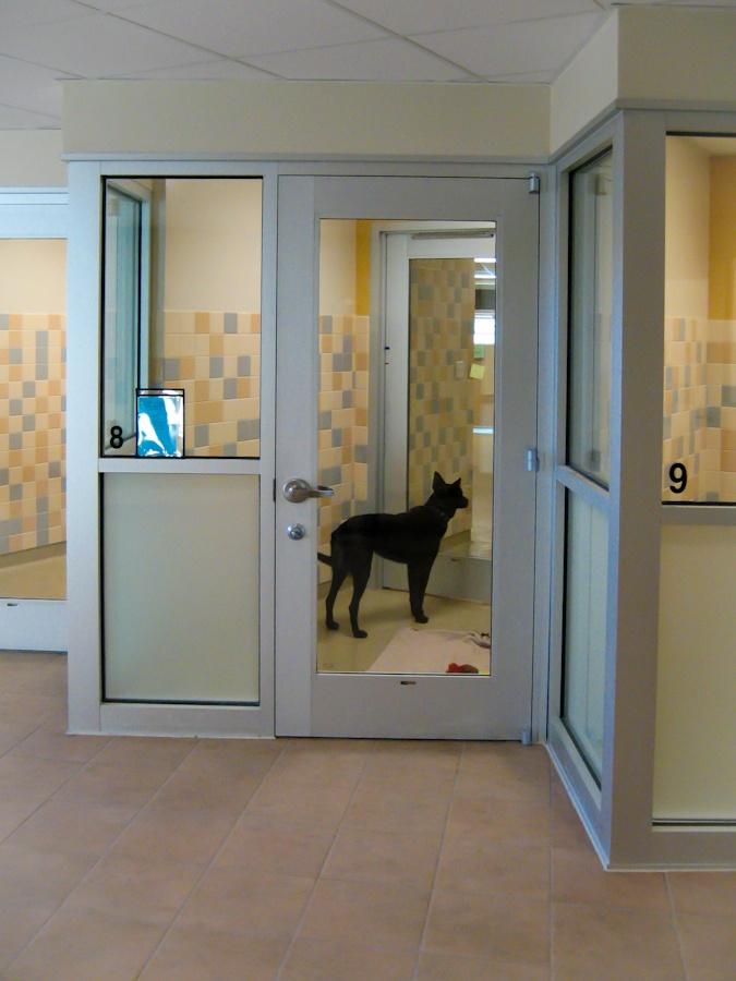 Dog Adoption Kennel At Longmont Humane Society Designed