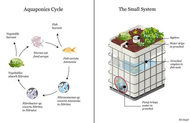 Aquaponics aquaponics diy full cycle for Arizona aquaponics