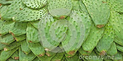 Nopales - Download From Over 56 Million High Quality Stock Photos, Images, Vectors. Sign up for FREE today. Image: 41315055