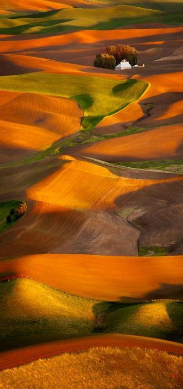 'Fields of Gold' - fields of grain --Sunset over the palouse, Washington