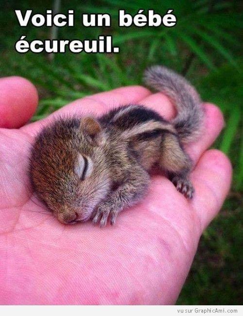 Voici un bébé écureuil