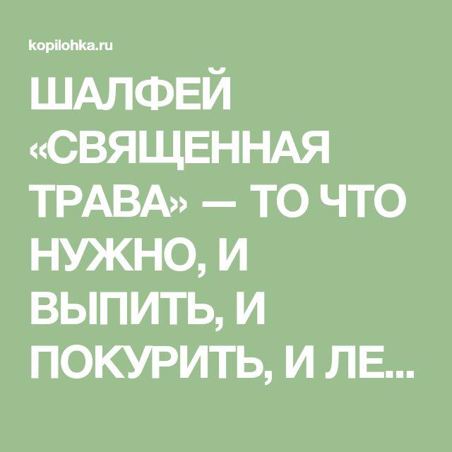 ШАЛФЕЙ «СВЯЩЕННАЯ ТРАВА» — ТО ЧТО НУЖНО, И ВЫПИТЬ, И ПОКУРИТЬ, И ЛЕЧЕНИЕ ПОЛУЧИТЬ.