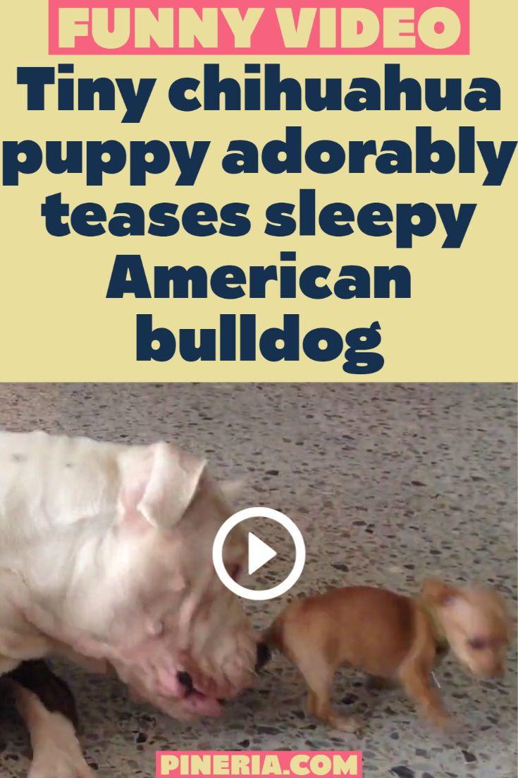 Pin On Tiere Hund