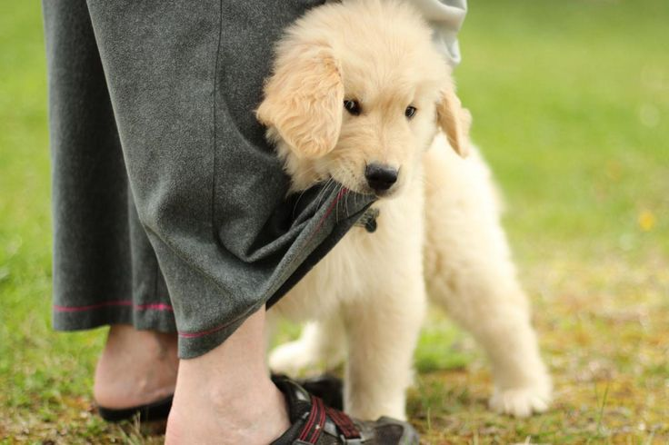 Dogs get jealous and 10 other facts you probably never knew about man's best friend