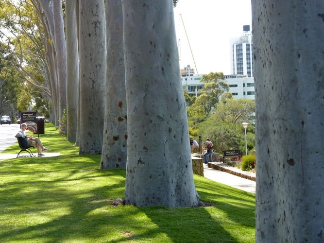 Kings Park from Life in Perth and First Impressions of Western Australia - ZigaZag