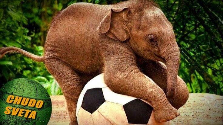 Маленькая осиротевшая слониха благодарна неравнодушному мужчине, спасшем...