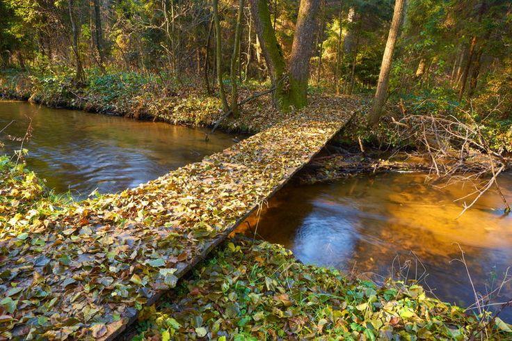 Roztocze - rezerwat rzeki Szum, Poland