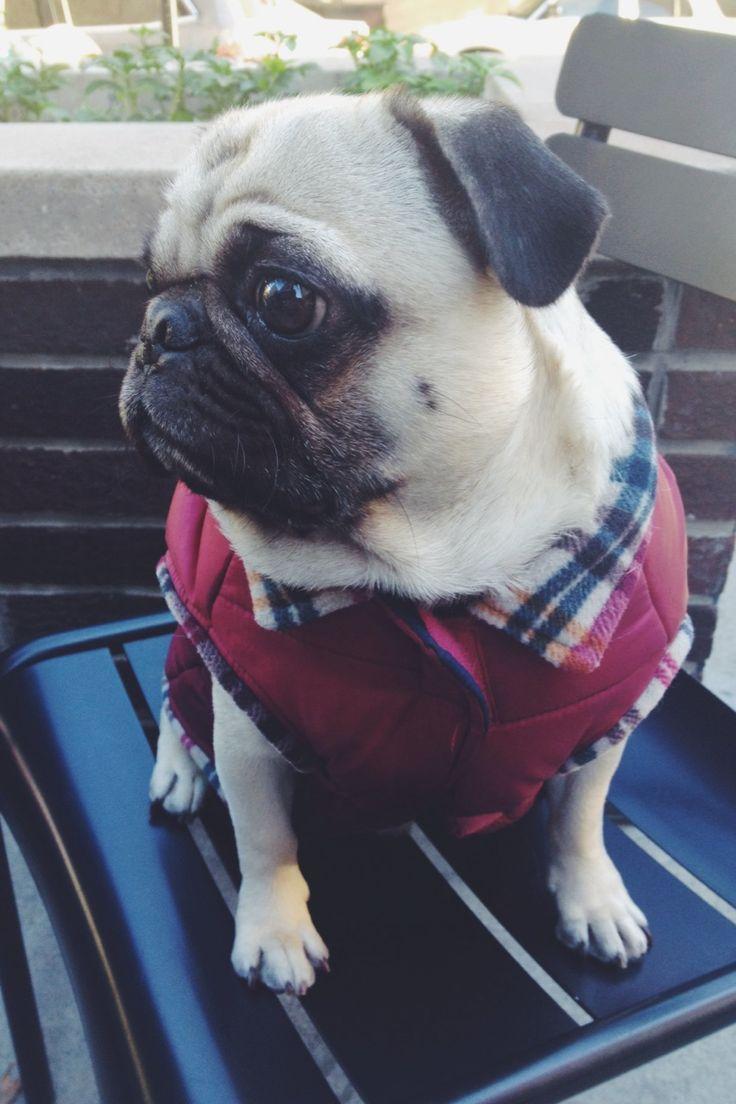 homerjaypug:  It's vest season