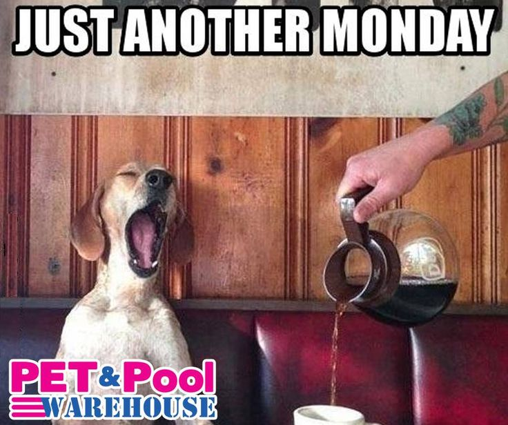 Just another Monday! Remember for all your pool supply and pet requirements, visit your nearest Pet & Pool Warehouse today and have a lovely Monday! #PetPool #MondayPets #Funnies