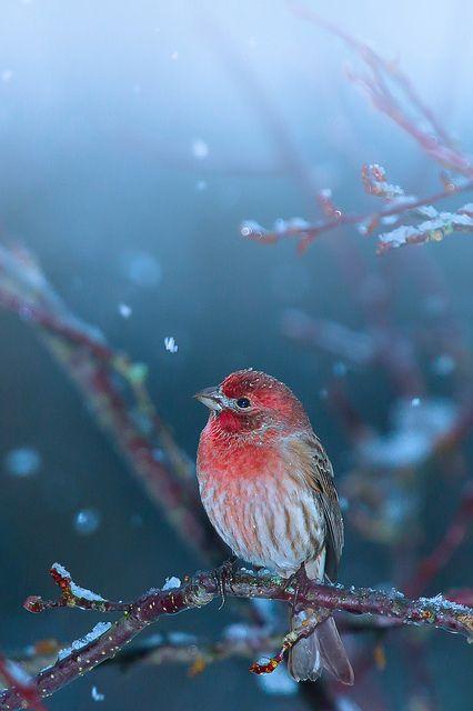 Little puzzled bird caught in snowfall by Shibuya Sakura, via Flickr