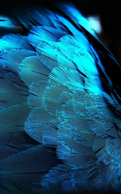 Teal feathers
