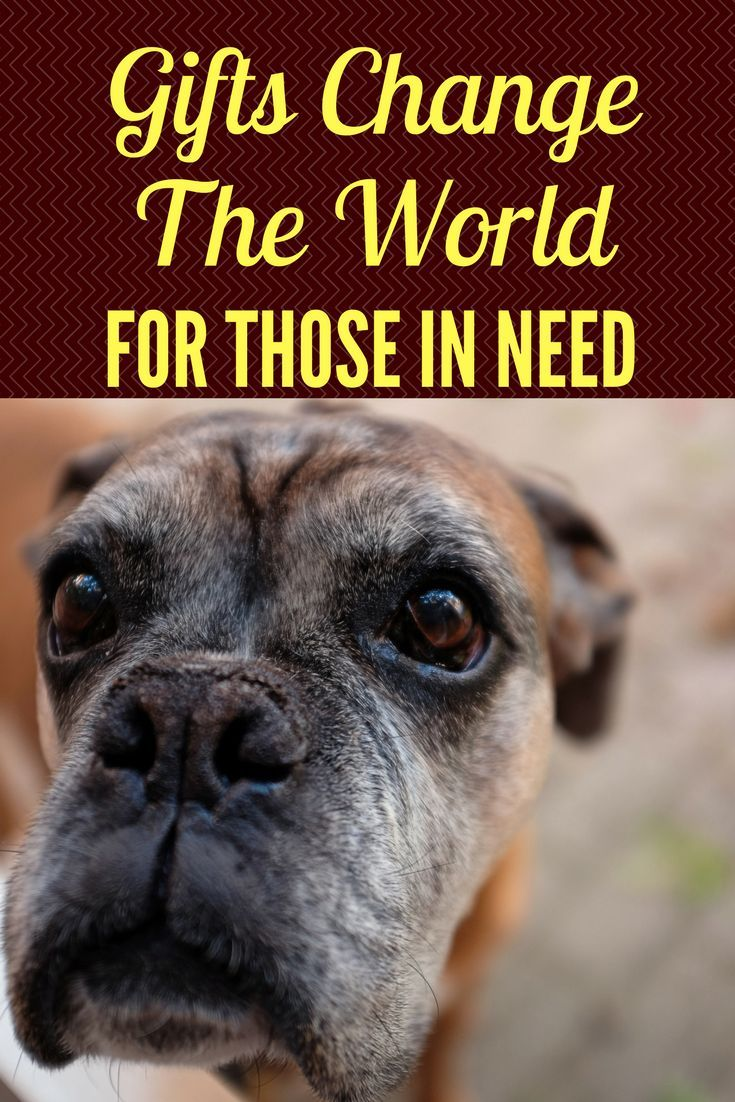 Senior Dogs Are The First To Be Euthanized Help Make A Difference In The Life Of A Senior Dog Or Cat Today Without Senior Dogs Care Dog Wellness Senior Dog