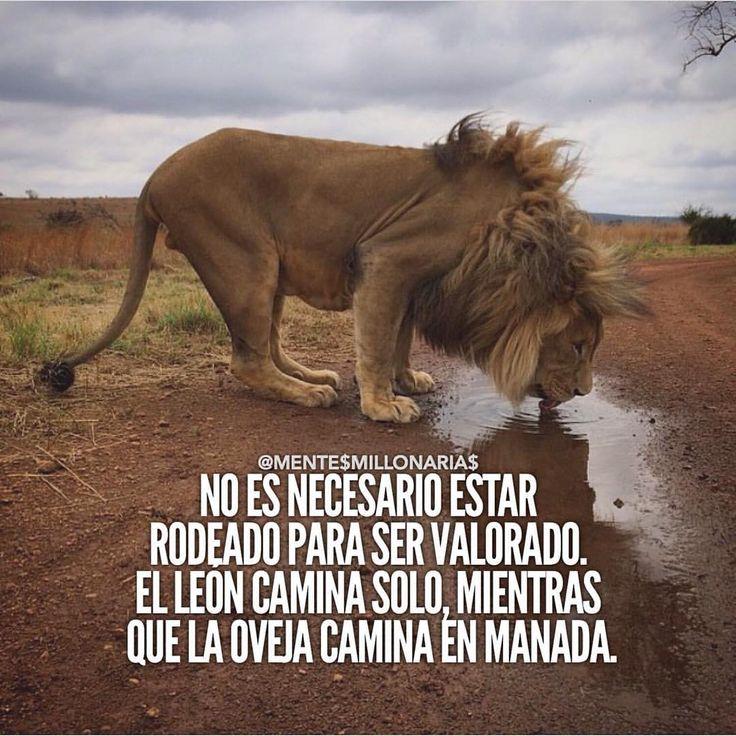 No es necesario estar rodeado para ser valorado. E león camina solo, mientras que la oveja camina en manada.