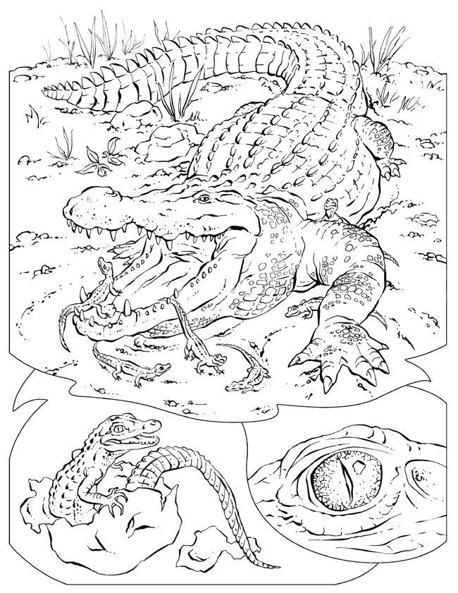 Mejores 342 imágenes de Gators! en Pinterest | Apliques, Fotos del ...